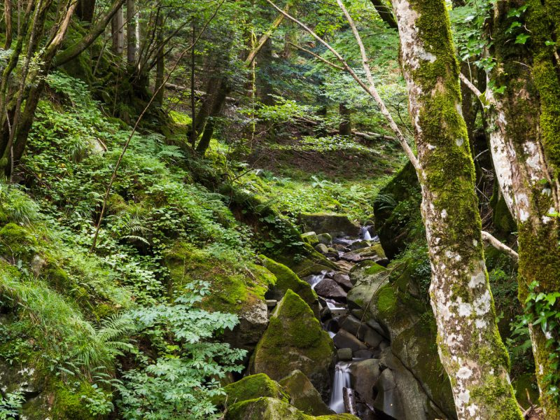 Casentrino Forest